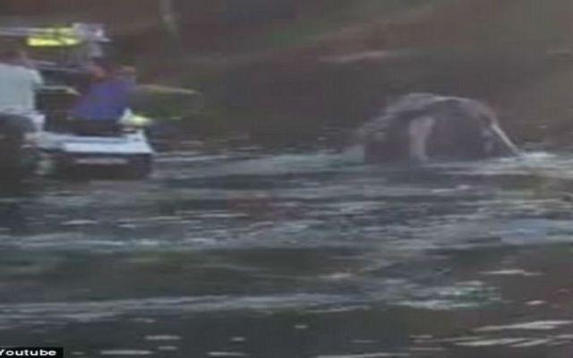 Video: ballena pide ayuda a pescadores - Foto de Daily Mail Online