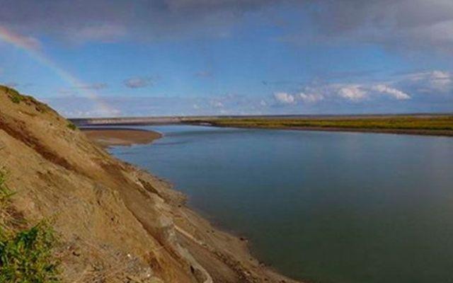 Investigadores descubren nueva especie de dinosaurio en Alaska - Foto de UAMN