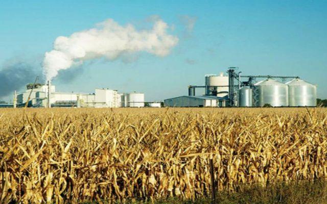 Reanuda gobierno federal licitación de ingenios azucareros - Foto: internet