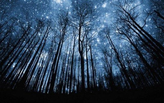 La última lluvia de estrellas de 2015 - Foto: internet