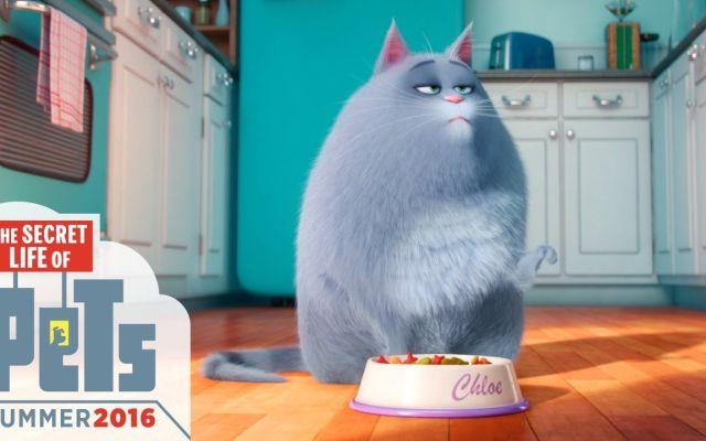 Las mascotas conquistan el cine
