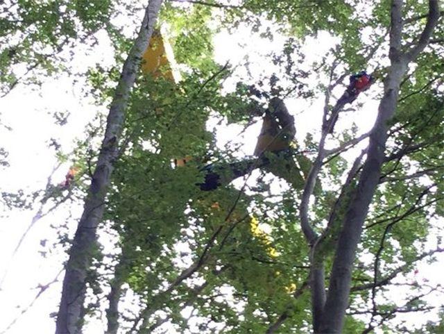 Video: pasa 13 horas en un árbol tras chocar su avión
