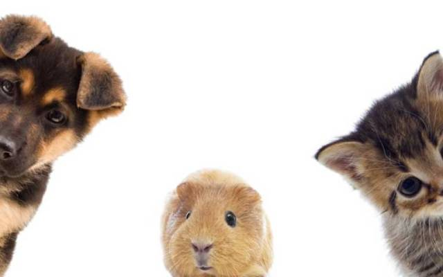 ¿Por qué debe registrar a sus mascotas en Locatel? - Foto de Internet