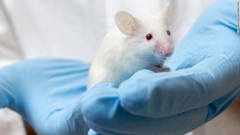 Zika causa infertilidad en ratones: estudio - Foto de Internet