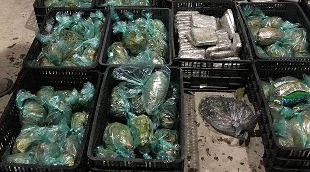 Ocultan 100 kilos de mariguana en aguacates, piñas y lechugas - Foto de Notimex