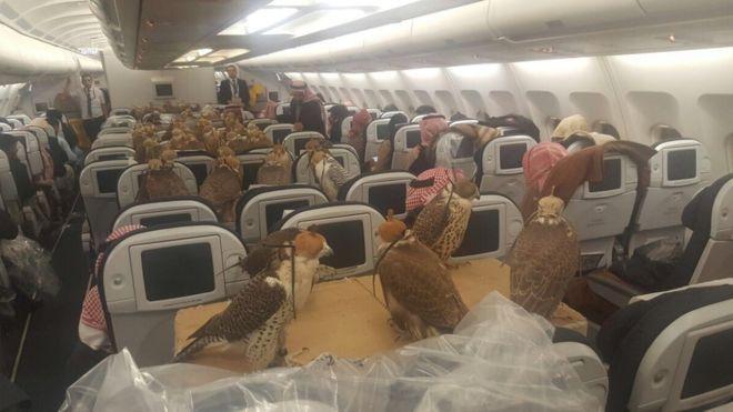 Ochenta aves de presa viajaron a Jeddah a bordo de un avión