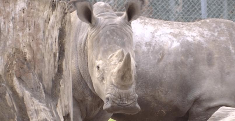 Cazadores entran a zoológico y matan a rinoceronte - Foto de Mirror