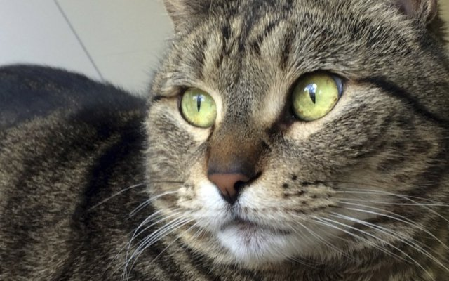#Viral encuentran en Canadá a gata que se perdió en California