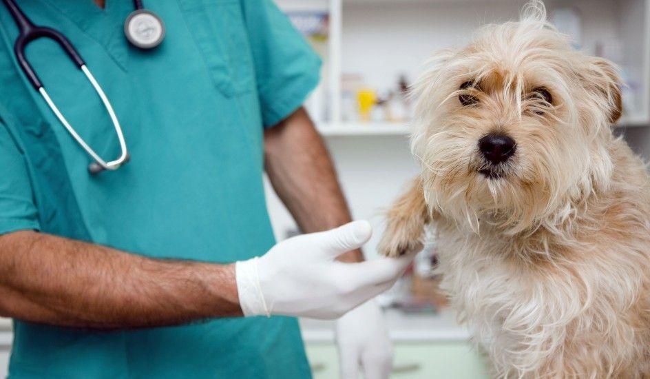 Hospital Veterinario de Iztapalapa ha atendido a más de 50 mil perros y gatos - Foto de Internet