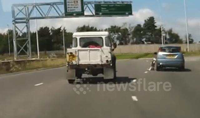 #Video Perro cae de coche a autopista