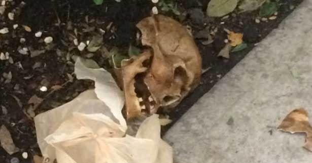 PGJ desmiente aparición de cráneo en Polanco