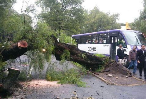 Cierran Mariano Escobedo por caída de árbol - Foto de César Velázquez