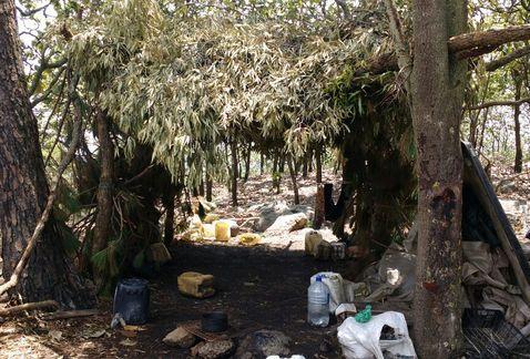 Investigan a autoridades en Jalisco por campamentos del crimen organizado - Foto de Milenio