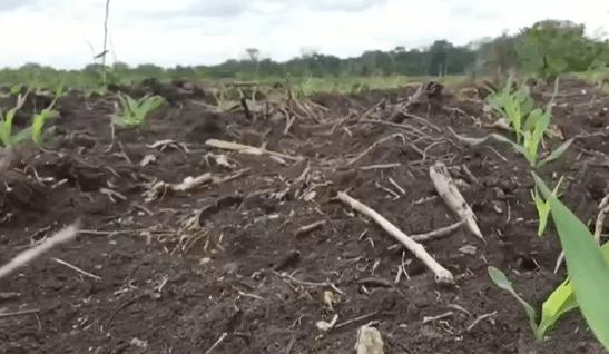 Denuncian deforestación en comunidades menonitas de Quintana Roo - Foto de Noticieros Televisa