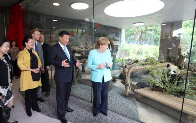 #Video Alemania recibe a dos pandas prestados por China