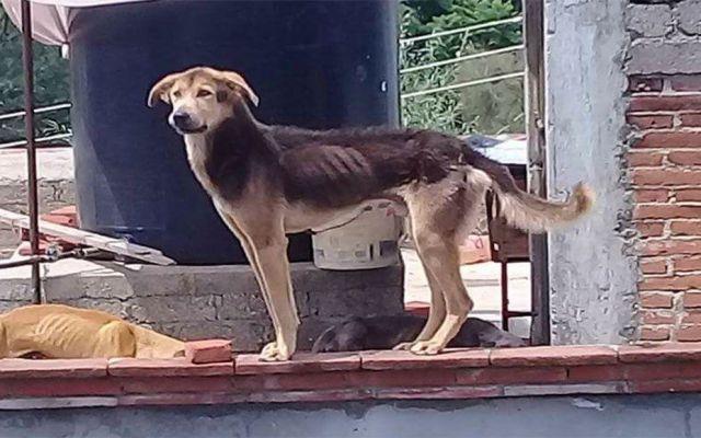 Rescatan a 14 perros abandonados en casa de Oaxaca