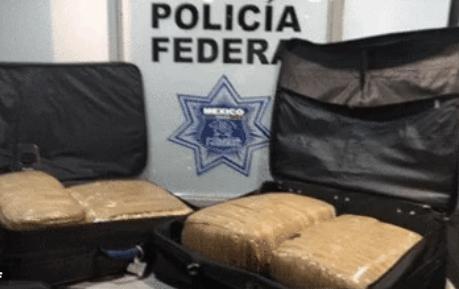 Decomisan mariguana en la Central del Norte - Foto de Policía Federal