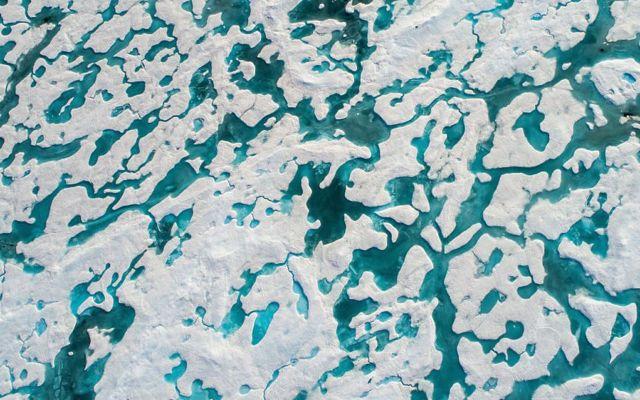 #Viral El reto del oso polar - Foto de Florian Ledoux