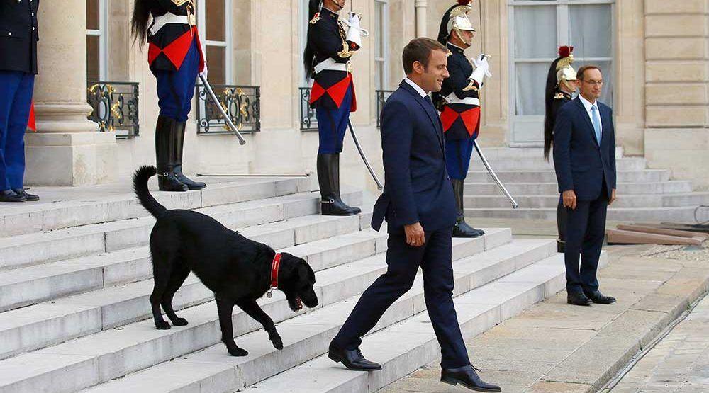 #Video Perro de Macron orina chimenea en plena reunión