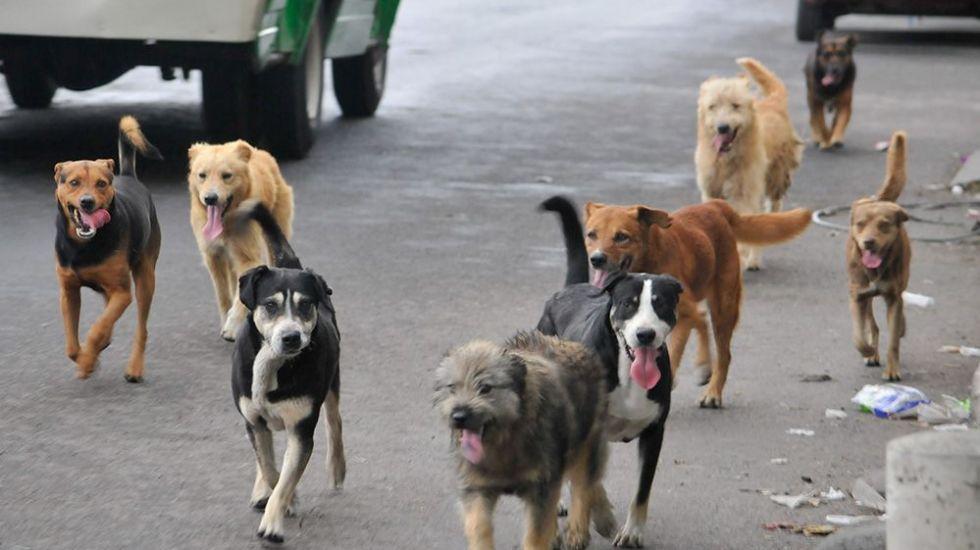Abandonan a 400 mil animales tras fiestas de fin de año - Foto de internet