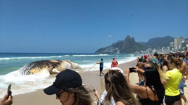 Ballena de 12 metros aparece muerta en playa de Ipanema