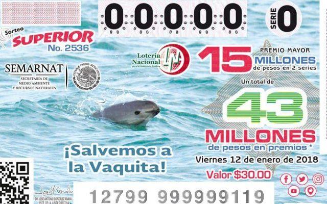 Lotería Nacional lanza billete en apoyo a la vaquita marina - Foto de Lotería Nacional