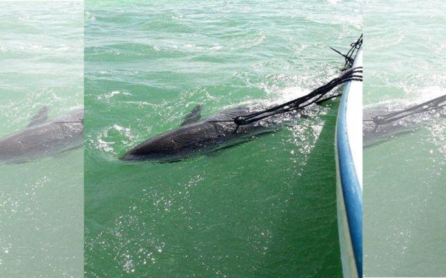 Profepa rescata dos falsas orcas en Yucatán - Foto de Profepa