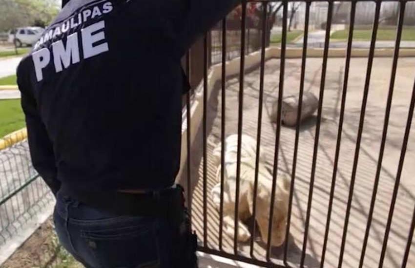 Encuentran animales abandonados en zoológico de Reynosa - Foto de Excélsior