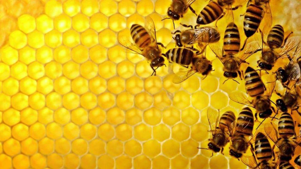 Proponen proyecto para mitigar mortandad de abejas en Chiapas - Foto de Archivo