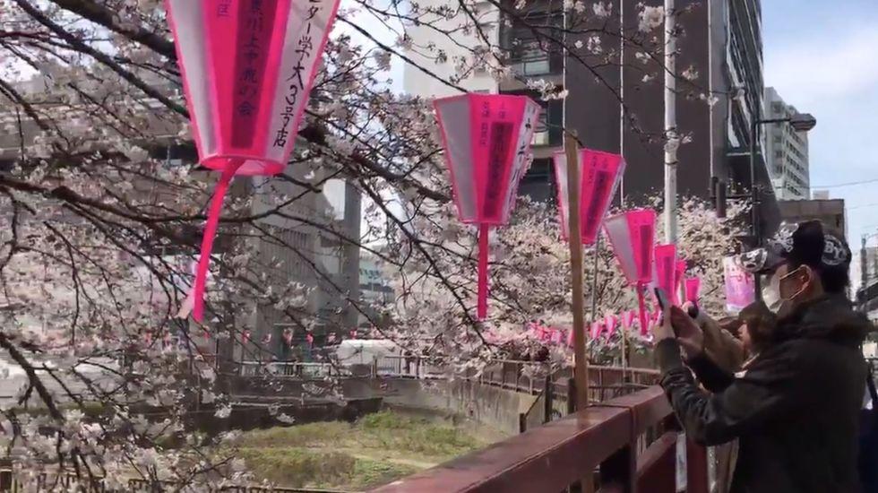 Florecen los cerezos en Tokio - Foto de @fujiko_f_toshio