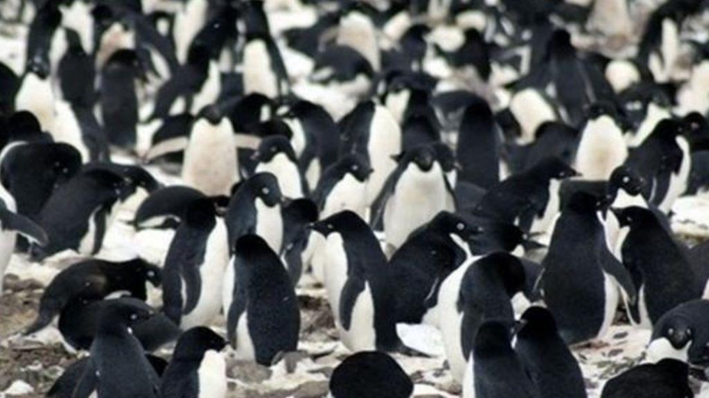 Encuentran supercolonia de pingüinos en la Península Antártica - Foto de Europa Press