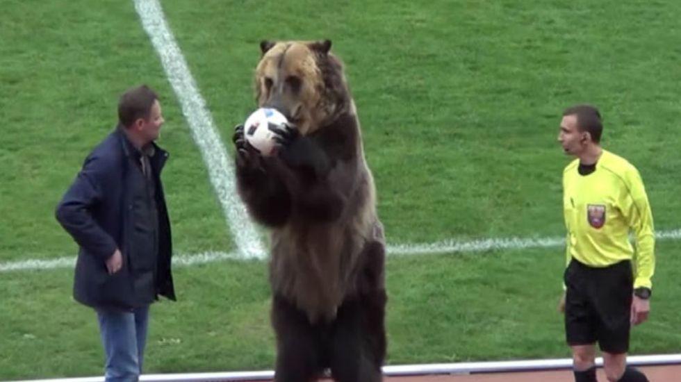 #Video Oso realiza saque de honor en partido de futbol en Rusia - Foto: Youtube.