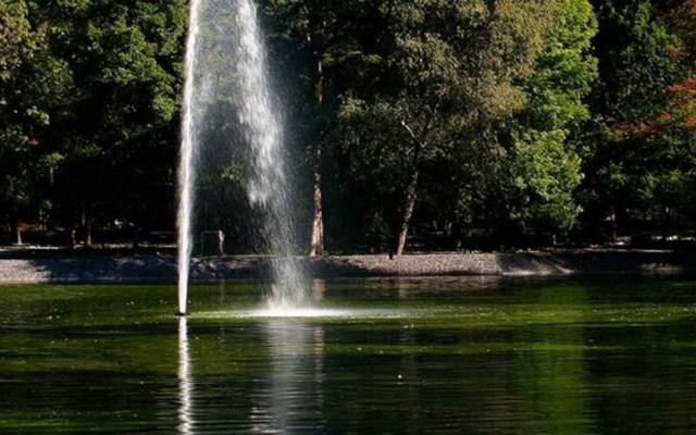 Sedema aclara causas de muerte de peces en Lago de Chapultepec - Foto de Twitter Bosque de Chapultepec