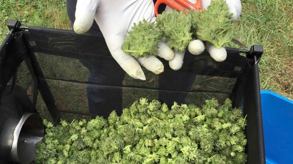 Detienen a dos que transportaban mariguana en un diablito en la colonia Morelos - Foto de AP