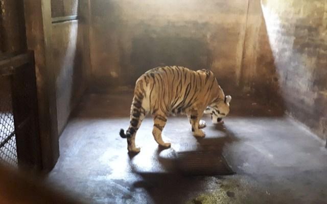 Aseguran 54 animales de Zoológico de Puerto Vallarta por maltrato - Foto de Profepa