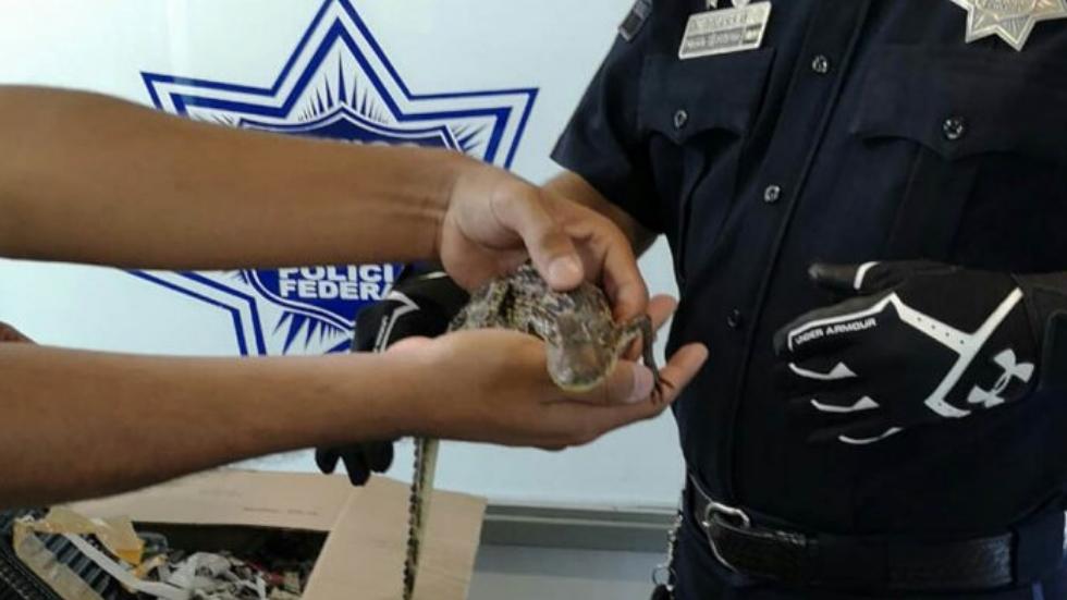 Rescatan a dos cocodrilos en la Central del Norte - Foto de Policía Federal