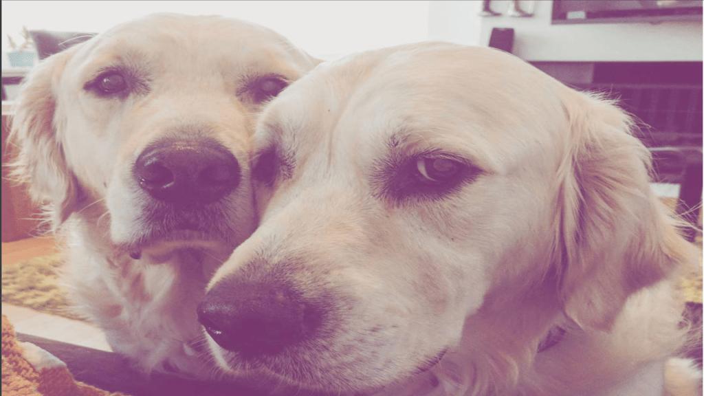 #VIRAL El crecimiento de dos perros en menos de dos minutos