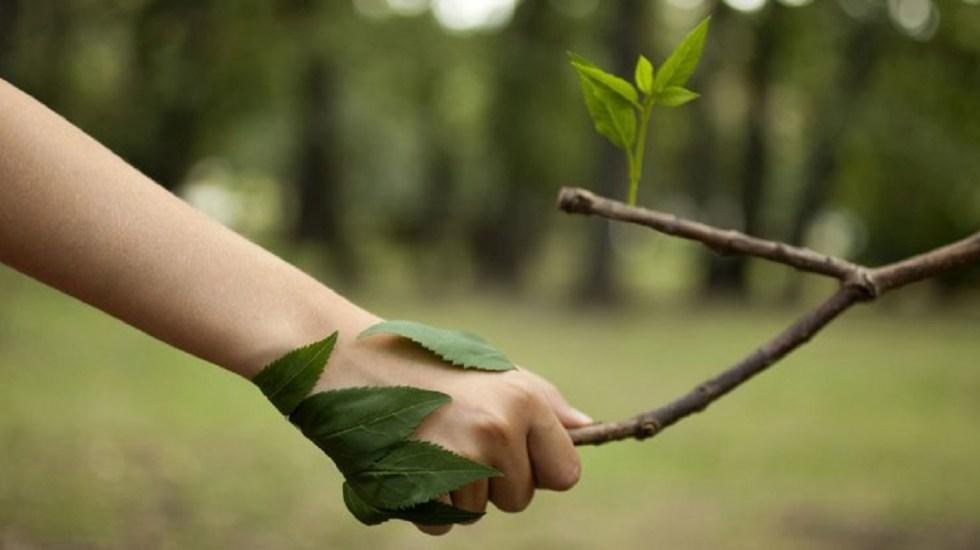 Grandes empresas se adaptan al cuidado del medio ambiente - Foto de internet