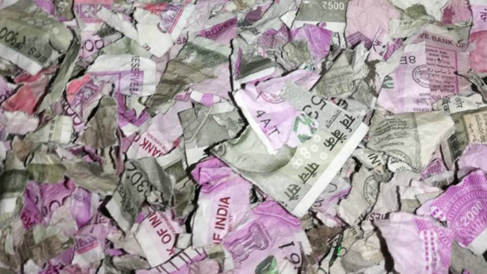 Ratas se comieron 18 mil dólares en billetes en un cajero automático