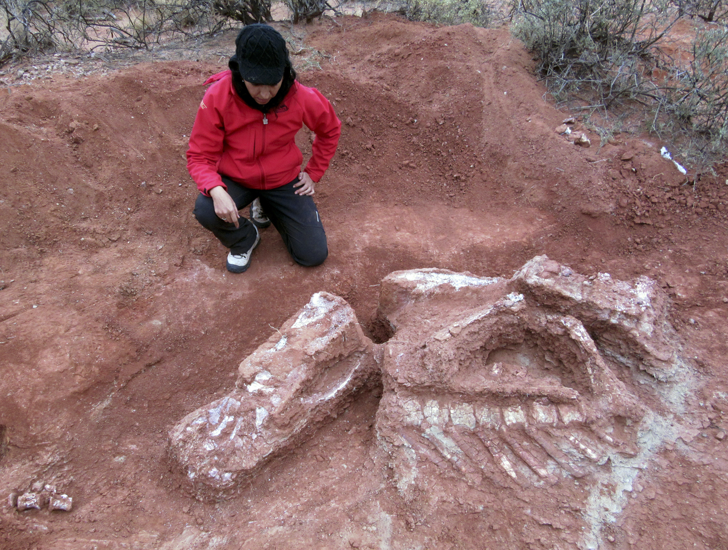 Hallado en Argentina el gran dinosaurio más antiguo — El primer gigante
