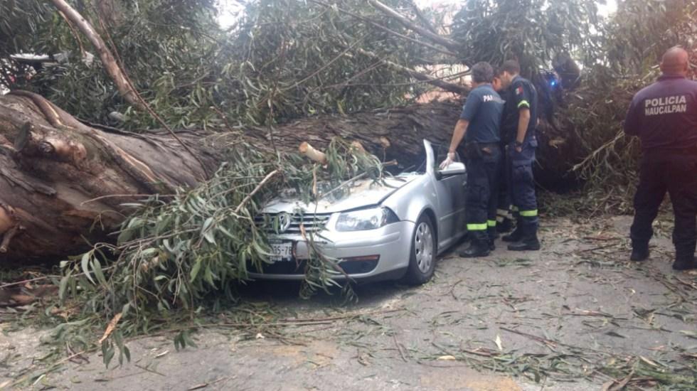 Árbol caído mata a cuatro personas en el Edomex - Foto de @C4Nauc