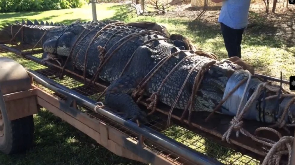 En Australia atrapan a cocodrilo gigante cerca de desfiladero turístico - Foto de The Katherine Times