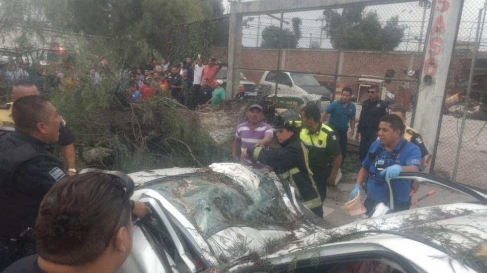 #Video Caída de árbol en Edomex deja saldo de un muerto y dos heridos - Foto de @MrElDiablo8