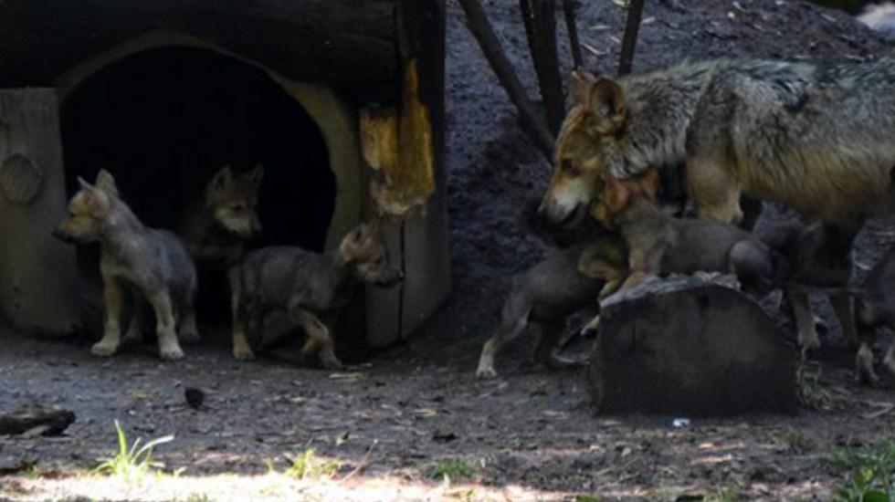 Foto de Zoológicos de Los Coyotes