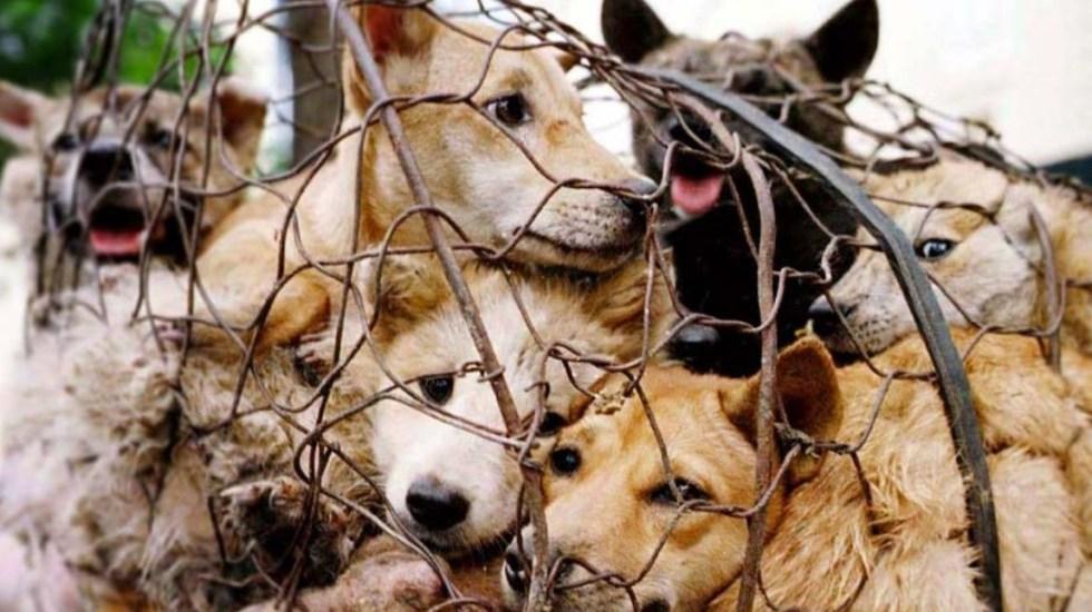 Prohiben la cría de perros para comer en Corea del Sur