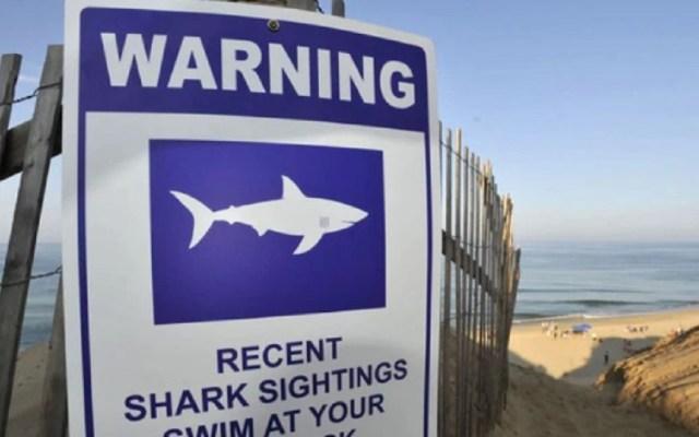 Adulto mayor sobrevive ataque de tiburón gracias a extraña casualidad - Foto de internet