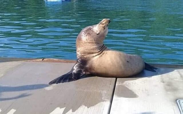 #Video Sorprende en Acapulco la visita de lobos marinos - Foto de @MaPokett