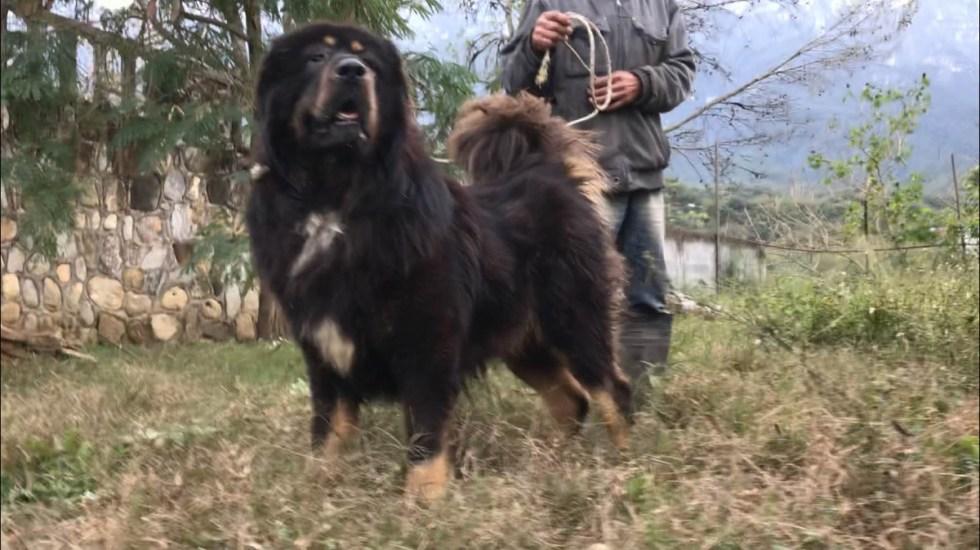 Familia descubre que su mascota es un animal en peligro de extinción - Foto de internet