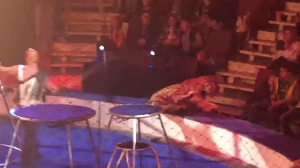 #Video Tigre convulsiona en circo ruso y le tiran agua encima - Captura de pantalla