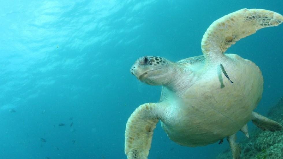 Una sola pieza de plástico es capaz de matar a una tortuga - Foto de Kathy Townsend